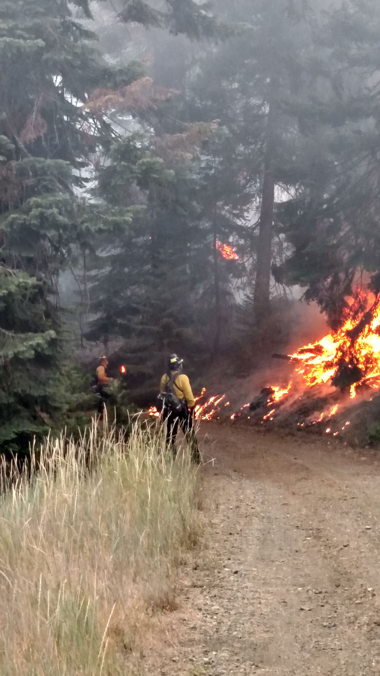 Wildland fire photo2.png
